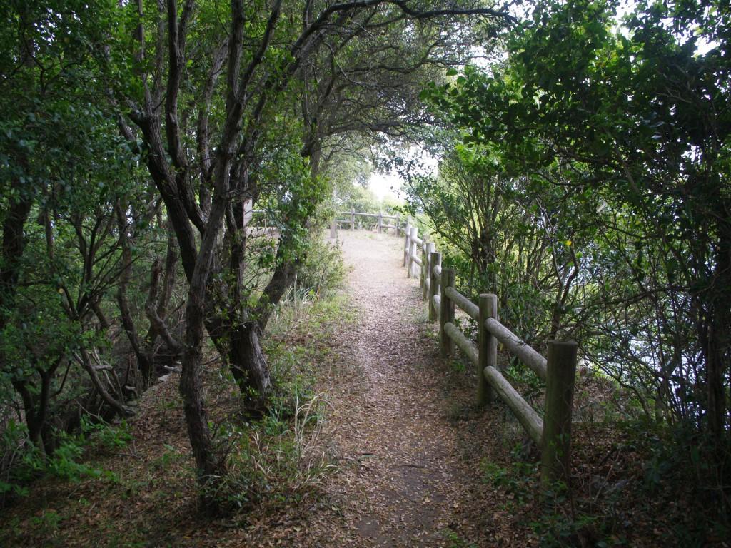 岬の木のトンネルを抜けて